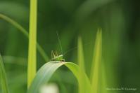 草むらで - Bamboobooのひとりごと