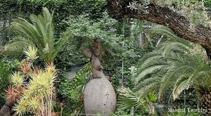 Ginza Sony Park - この植物をお買い2