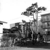 ミニクーパーと赤松と44二眼レフ - 照片画廊