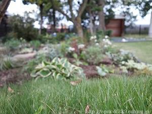 秋の庭しごと 宿根草と低木の植えつけ3 - シンプルで心地いい暮らし