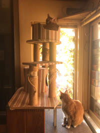 秋の陽光と猫。 - 小樽BOTAマスの今夜もWHISKY