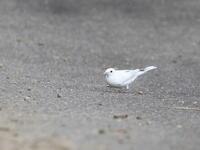 OH !! 可愛い・・・ - 季節の鳥達