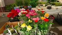 矯正展に出店 - 手柄山温室植物園ブログ 『山の上から花だより』