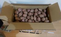 今年も安納芋が届きました - 波止釣り放浪記 part3