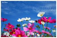 秋の桜 #1 - Hibi*Photo ~Second season~