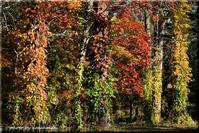 秋色のドレスを着て - 北海道photo一撮り旅