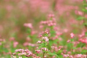 赤蕎麦の花♪ - happy-cafe*vol.2