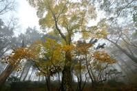 霧に包まれた奥駆け道山上ヶ岳~阿弥陀ヶ森 - 峰さんの山あるき