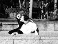 ★猫神様 - 一写入魂