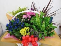 寄せカゴと胡蝶蘭 - 大阪府茨木市の花屋フラワーショップ花ごころ yomeのブロブ