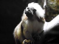 雨の日は小獣館で(前編) - 動物園放浪記