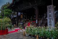 藤袴祭~革堂行願寺 - 鏡花水月