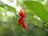 10月17日の三瓶山④ - 清治の花便り