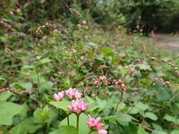三瓶山麓の花 - 清治の花便り