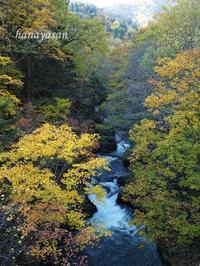 渓谷 - こもれびの森