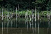 山口県下関市一の俣桜公園に撮影へ、、、2019 10月 - 優柔不断なAB型男の独り言 THE dream room.
