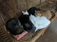 猫が溺れる、猫に溺れる - りきの毎日