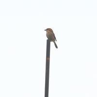 やっと撮れた - TACOSの野鳥日記