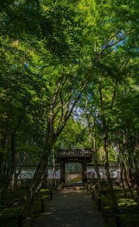 地蔵院~モシュ印/コケ寺リウム - 鏡花水月