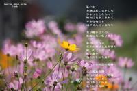 奇跡 - 陽だまりの詩