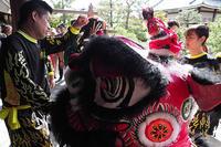 神戸華僑総会 舞獅隊の獅子舞チームも新旧交代の世代交代が進む - スポック艦長のPhoto Diary