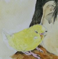 お肩でウトウト… - 水色堂 ~Blue & Yellow Budgie~