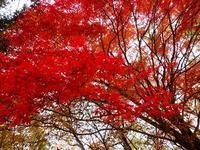 2019白老原生林の紅葉 - ゆうゆうタイム