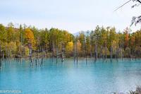 秋の「青い池」VOL.2~10月の美瑛 - My favorite ~Diary 3~