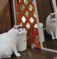 ねこたつ - 素人木工雑貨と犬猫日記