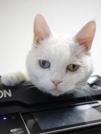 猫のお留守番 リュウちゃん編。 - ゆきねこ猫家族