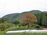 10月21日の大万木山①*横手コース* - 清治の花便り