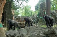 上野動物園のゴリラ家族に、突然の事件が発生 - 旅プラスの日記