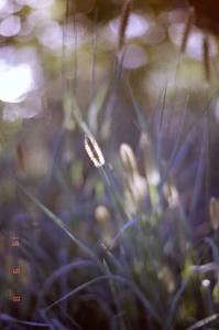 秋の足音 - 光と影