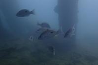 19.10.27レッドでじっくり - 沖縄本島 島んちゅガイドの『ダイビング日誌』