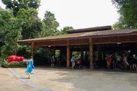 August 2019 Singapore Zoo 11 ホワイトタイガー - 墨色の鳥籠