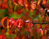 軽井沢レイクガーデンで真新しい紅葉を - 星の小父さまフォトつづり