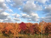 秋の終わり♪ - 笑う門には福来たる