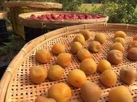 「梅仕事③-2019」 - 自然卵農家の農村ブログ 「歩荷の暮らし」
