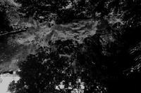池 - 散歩と写真