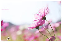 秋の桜#3 - Hibi*Photo ~Second season~