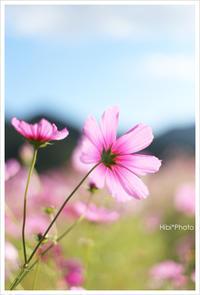 秋の桜#2 - Hibi*Photo ~Second season~