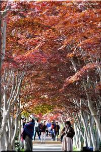 紅葉便り(平岡樹芸センター) - 北海道photo一撮り旅