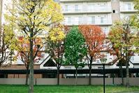 マンションの紅葉と黄葉と緑葉 - 照片画廊