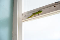 gecko - きっと、たぶん、大丈夫。