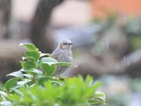 窓越しに - TACOSの野鳥日記