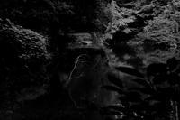 池枯枝 - 散歩と写真