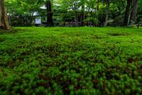 夏の終りに(三千院・有清園~奥の院) - 花景色-K.W.C. PhotoBlog