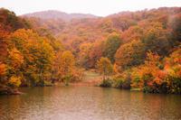 大厳寺高原 - 松之山の四季2