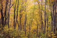 天水山の紅葉 - 松之山の四季2