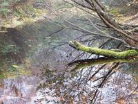 雨飾温泉から登る秋の雨飾山Mount Amakazari in Myōkō-Togakushi Renzan National Park - やっぱり自然が好き